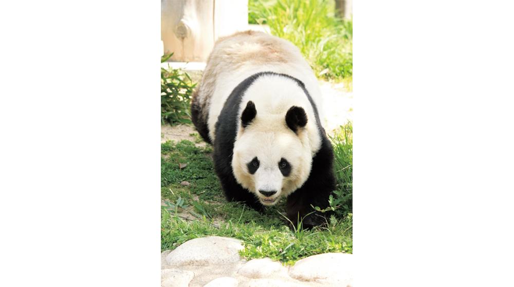 5月パンダ大好き!