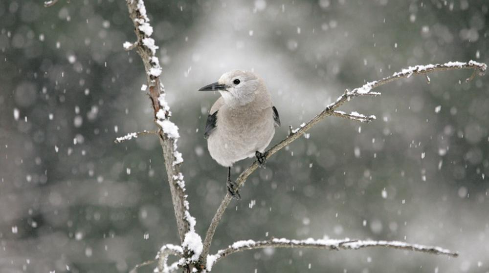2月雪の中で動物は何してるの?