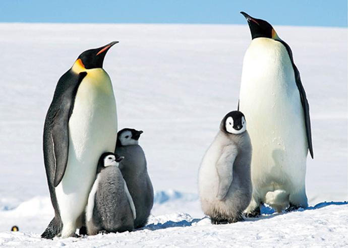 2月【自然・観察】こおりのくにの こうていペンギン